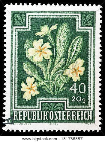 AUSTRIA - CIRCA 1948 : Cancelled postage stamp printed by Austria, that shows Primrose.