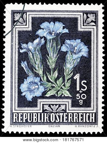 AUSTRIA - CIRCA 1948 : Cancelled postage stamp printed by Austria, that shows Trumpet gentian.