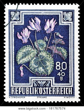 AUSTRIA - CIRCA 1948 : Cancelled postage stamp printed by Austria, that shows Alpine cyclamen.