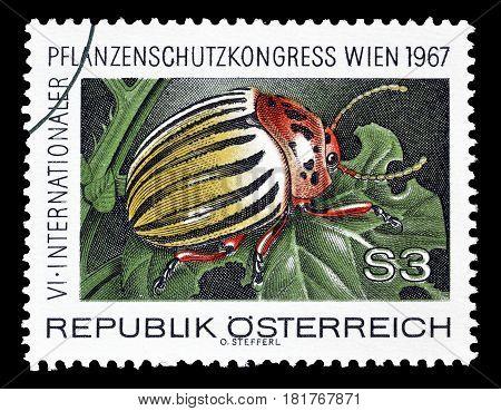 AUSTRIA - CIRCA 1967 : Cancelled postage stamp printed by Austria, that shows Colorado Potato Beetle.