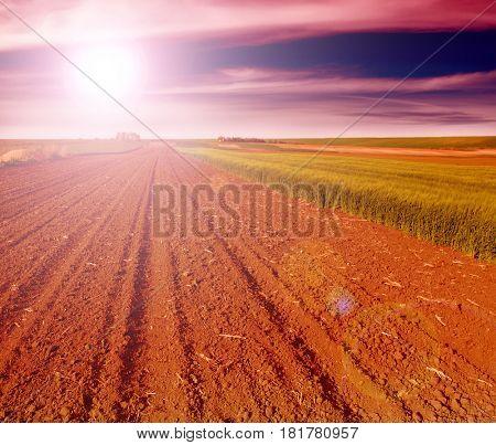Plowed field in spring time