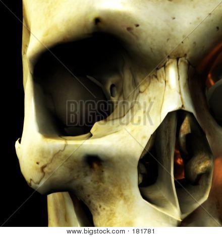 Close Up Skull Eye