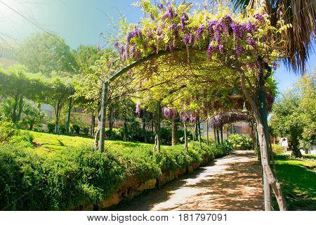 Park. Beautiful garden with acacia flowers. Mediterranean spring.