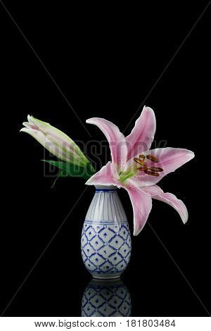 Pink Stargazer lily in vase isolated on black back ground