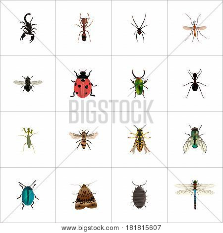 Realistic Spinner, Midge, Ladybird And Other Vector Elements. Set Of Bug Realistic Symbols Also Includes Fly, Wisp, Ant Objects.