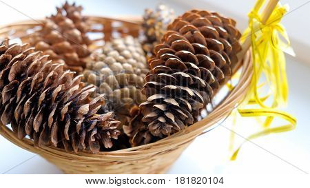 Fir cones in a basket with yellow bow