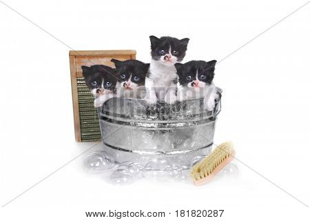 Adorable Kittens Taking a Bath in a Washtub With Brush and Bubbles