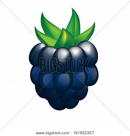 Sweet vector blackberry on a white background