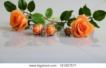 Clay Orange Roses Flower On White Background