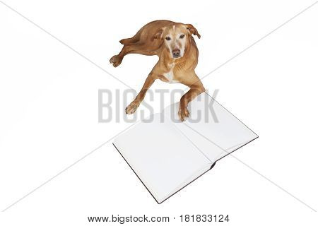 Brown dog lying by an open book. Animals training, education, erudition. Isolated on a white background.