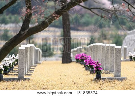 Gravestones At Seoul National Cemetery