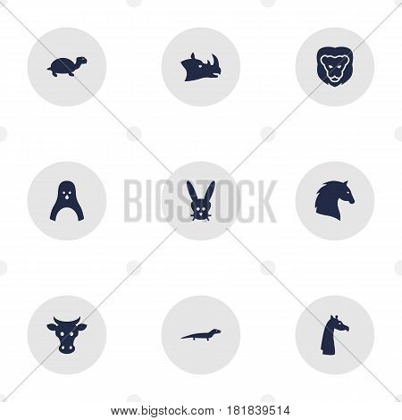 Set Of 9 Brute Icons Set.Collection Of Sea Bird, Camelopard, Bunny And Other Elements.