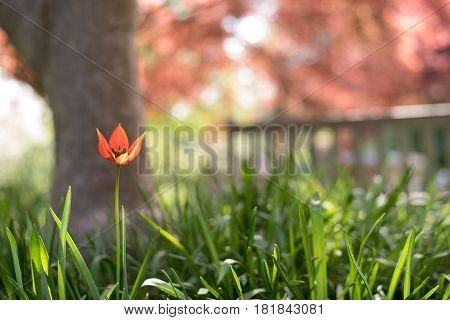 flowers in front view with blurry park bench in background