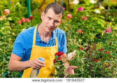 A Young Gardener Sprinkles His Favorite Roses With Water In A Greenhouse