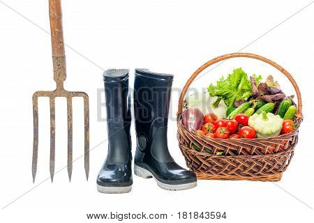 Forks, Rubber Boots And A Basket With A Crop Of Vegetables On A White Background