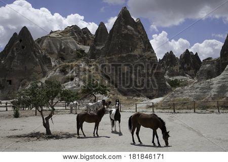 Beautiful landscape with horses in Capadocia, Turkey