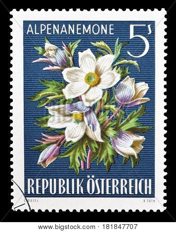 AUSTRIA - CIRCA 1966 : Cancelled postage stamp printed by Austria, that shows Alpine Pasque flower.