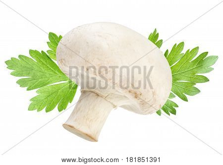One champignon mushroom and parsley leaves isolated on white background