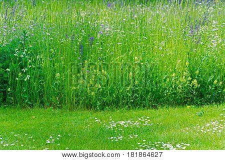 Cut Off Grass