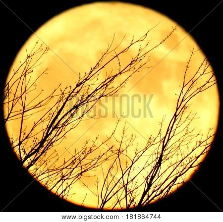 Full light moon Halloween style whit tree behind.