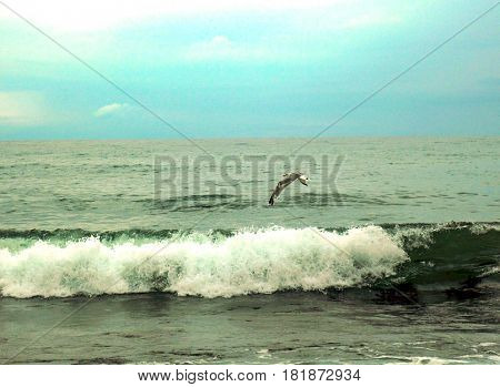 A romantic warm sea, a seagull and a picturesque of a dynamic wave pouring into a murmur of sea foam