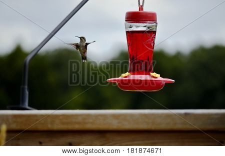 Glass bottle Hummingbird feeder filled with nectar food on a sunny summer day and hummingbird in flight