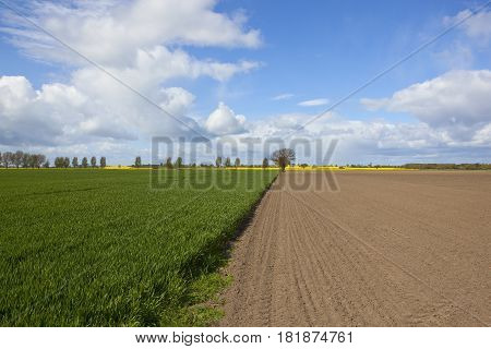 Green Wheat And Plowed Soil