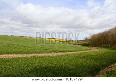 Wheat Fields And Woodlands