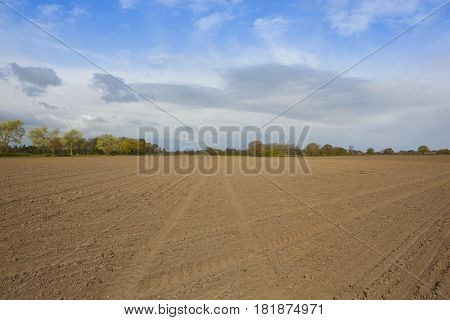 Springtime Trees With Plowed Soil