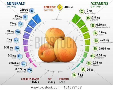 Vitamins and minerals of apricot fruit. Infographics about nutrients in raw apricot. Qualitative vector illustration for fruits vitamins agriculture health food nutrients diet etc