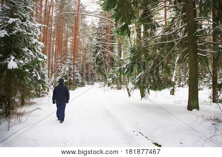 Lonely Man Walks Through The Winter Forest