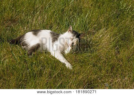 A cute cat relaxing on the grass in the garden, springtime happyness shot with copyspace, vintage color