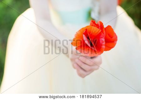 poppies, agriculture, production and ecology, nature and summer concept - close-up on red poppy flowers in two hands of a little girl, she in a white gown dress on a farm land of spring poppies