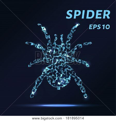 The Spider Consists Of Points, Lines And Triangles. The Polygon Shape In The Form Of A Silhouette Of
