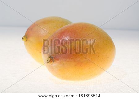 Two ripe organic golden yellow mangoes ready to eat close up