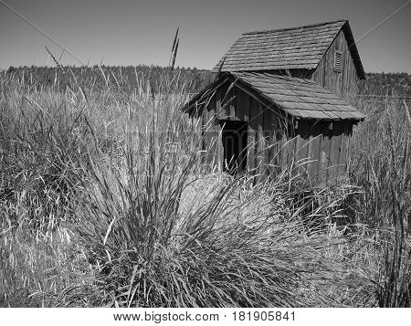 Two farm buildings with wooden sides and tiled roofs being swallowed up by wild grasses on a ranch in Central Oregon on a sunny summer day.