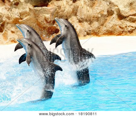 Bottlenose Dolphins Performing