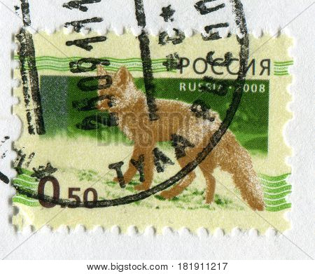 GOMEL, BELARUS, APRIL 15, 2017. Stamp printed in Russia shows image of  The Foxes, omnivorous mammals belonging to several genera of the family Canidae, circa 2008.