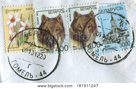 GOMEL, BELARUS, APRIL 15, 2017. Stamp printed in Belarus shows image of  The Narcissus hybridus, Shklov town hall and Canis lupus, circa 2008.
