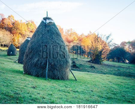 stack of hay in the fall in maramures romania