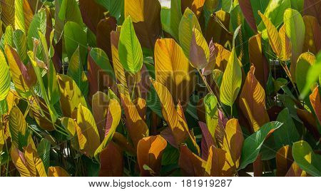 abstract background of leaf two color green and brown