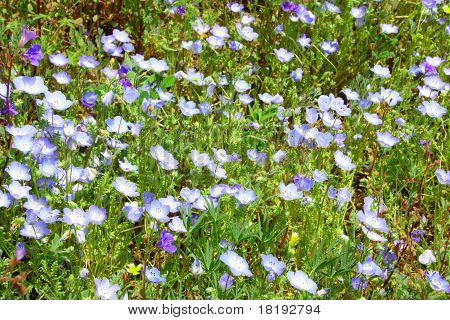 Prarie Wildflowers