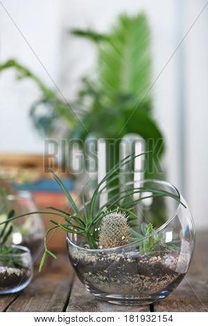 Mini succulent garden in glass terrarium on wooden table