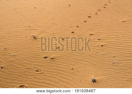 Dog footprints in the sand. a paw print in the sand