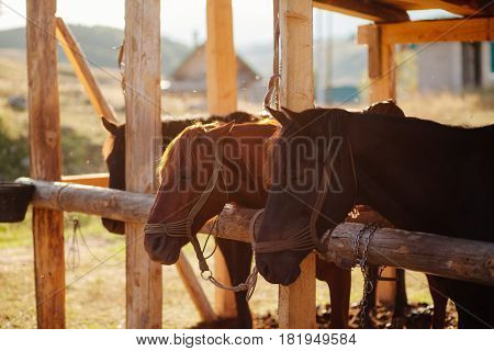 beautiful horses in stall. Stall outside. wooden stalls