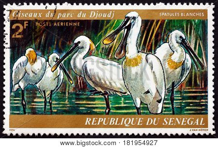 SENEGAL - CIRCA 1974: a stamp printed in Senegal shows African Spoonbill Platalea Alba Wading Bird Djoudj Park Bird Sanctuary circa 1974