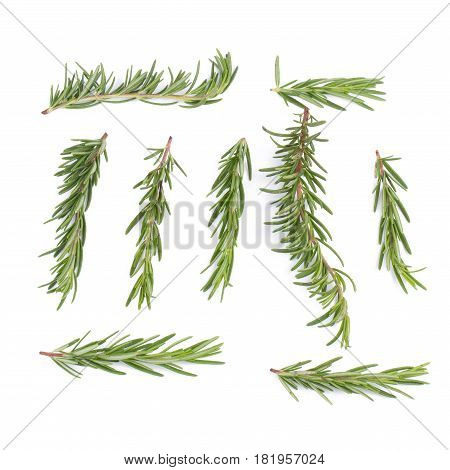 Rosemary Herbs And Medicinal Herbs. Organic Healing Herbs. Fresh Rosemary Bunch Rosemary Isolated On