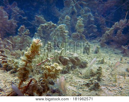 Freshwater Underwater Scene Freshwater Fish Rivers And Lakes