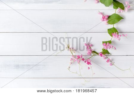 Mexican Creeper pink flower on white wood background with copy space