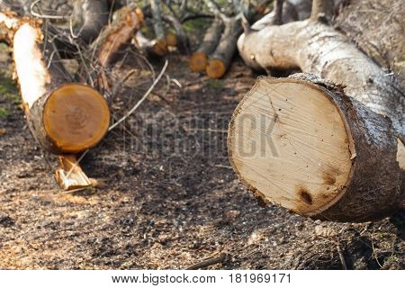 Close up picture of illegal deforestation in Transylvania Romania